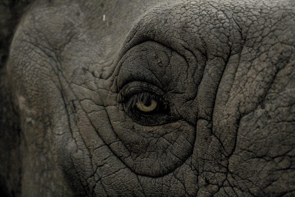 older rhino skin