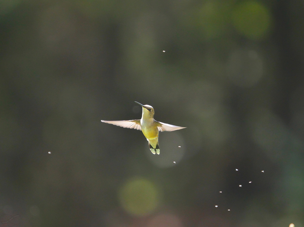 Self-Esteem A Hummingbird killing GNATS